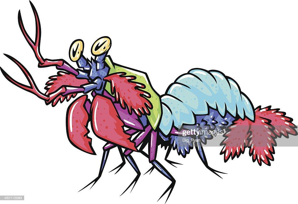 mantis shrimp vector art getty images rh gettyimages com Shrimp in Love Clip Art Shrimp in Love Clip Art