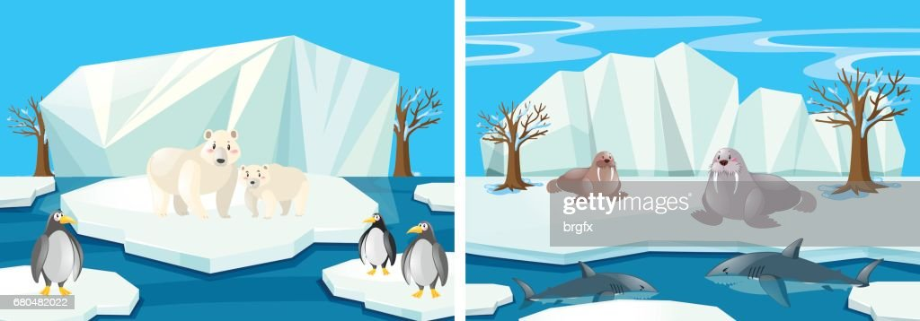 Many animals in the north pole