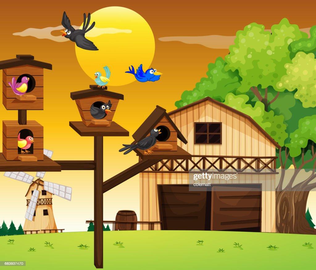 Many birds living in birdhouse