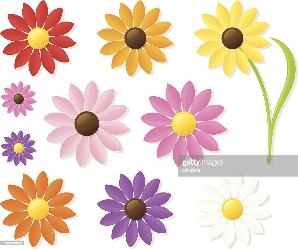 Many different colored daisies