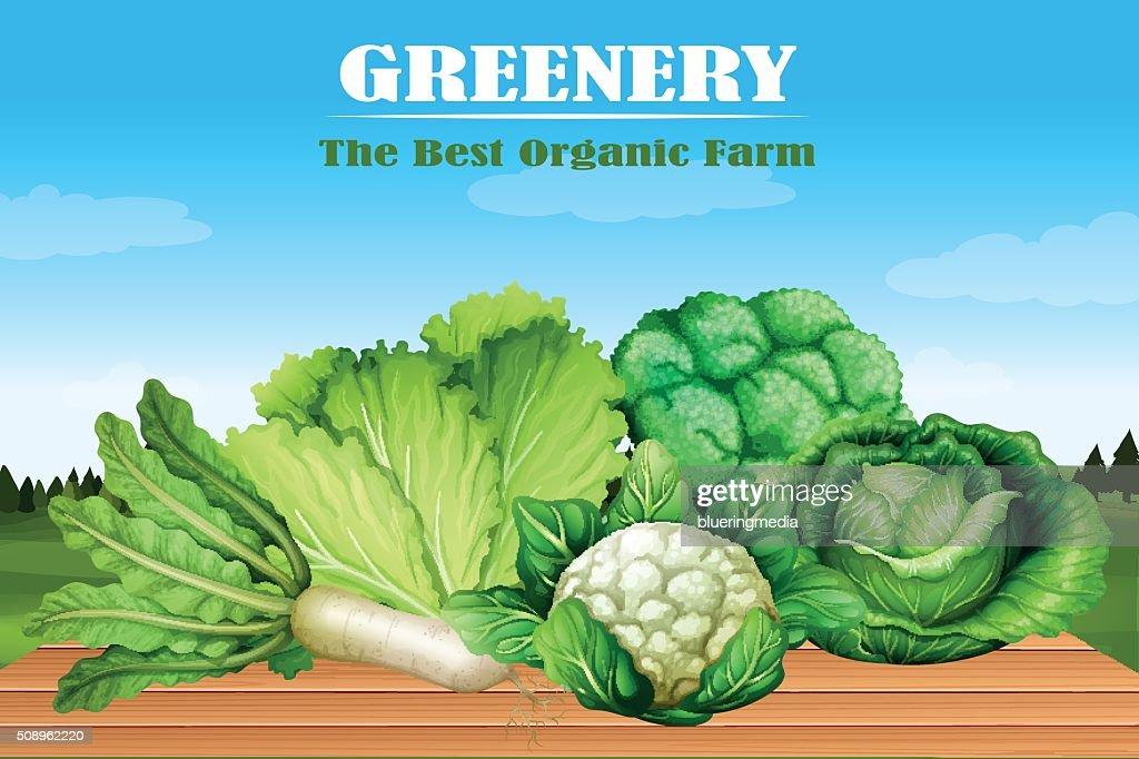 Many kind of green vegetables