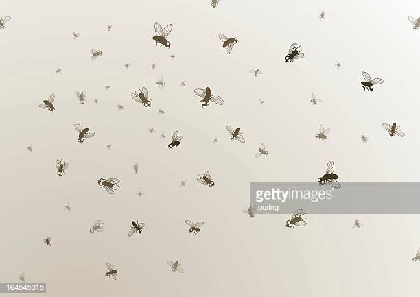 Many large and small black flies on a tan background