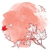 Maple branch. Sketch on desaturated grunge background