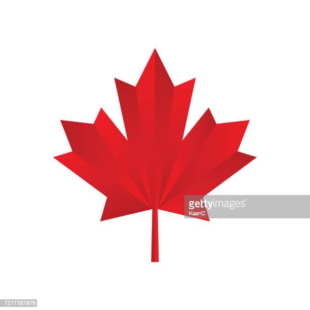 maple leaf icon. canadian symbol. vector illustration. stock illustration - maple leaf stock illustrations