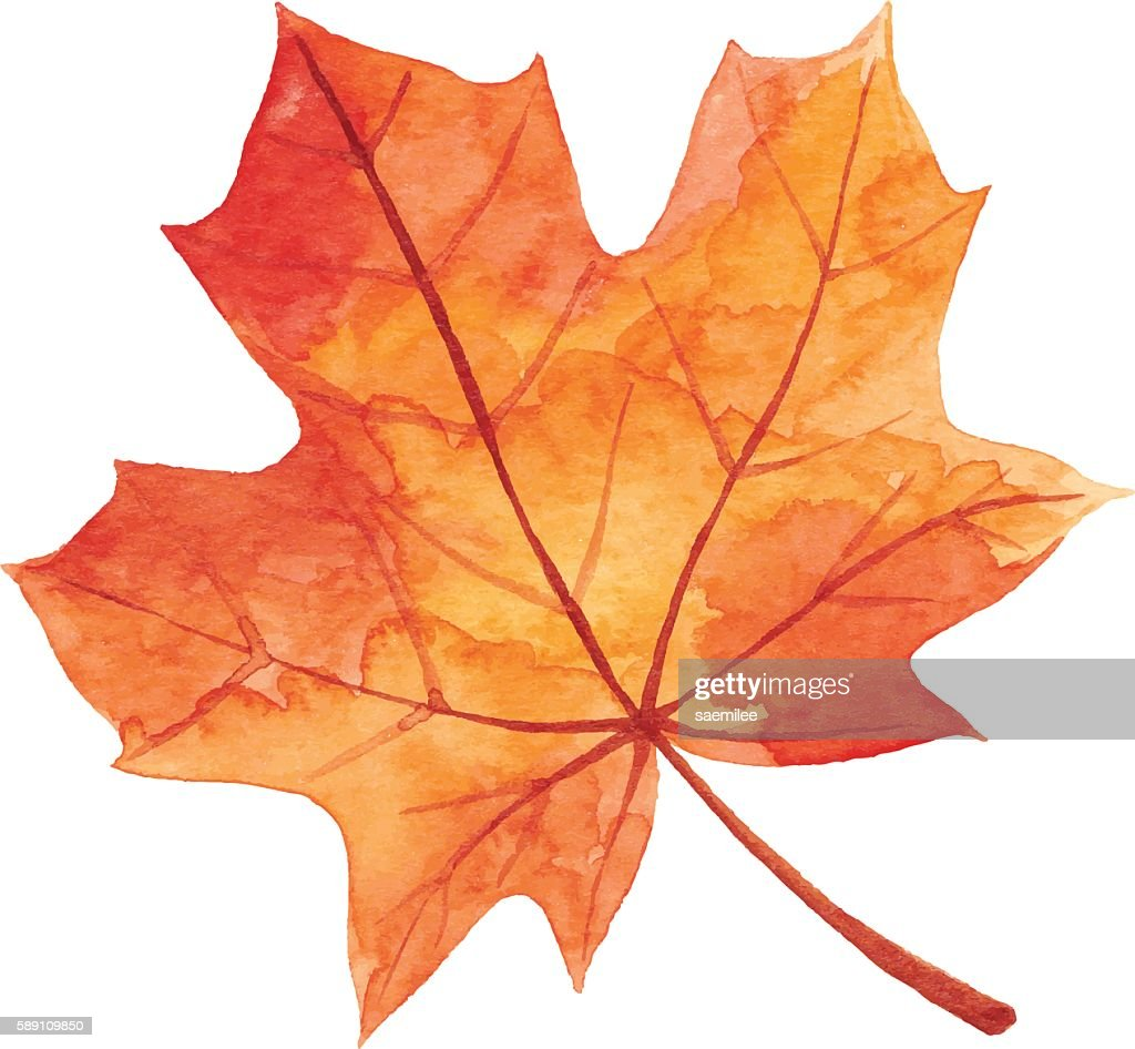 Maple Leaf in Autumn - Watercolor : Stock-Illustration