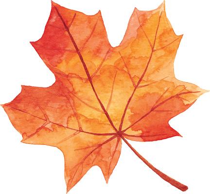 Maple Leaf in Autumn - Watercolor - gettyimageskorea
