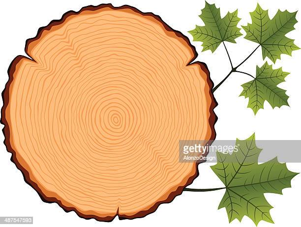 Maple Wooden Cross Section