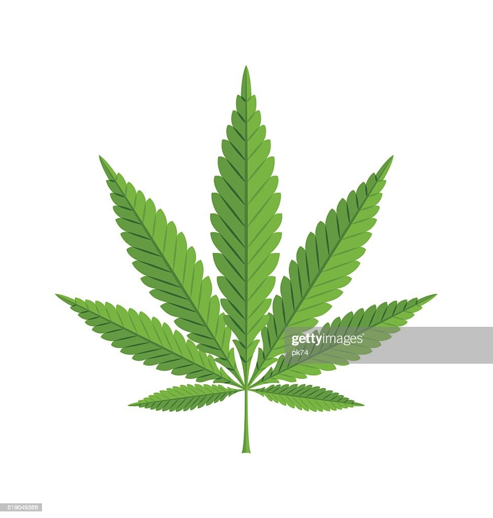 Marijuana hemp leaf on white background