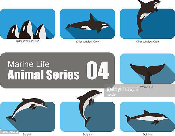 marine life cartoon collection, vector - killer whale stock illustrations, clip art, cartoons, & icons