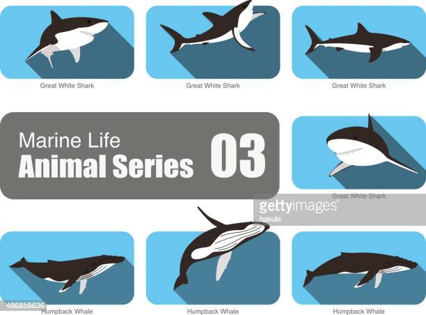 marine life cartoon collection, vector - humpback whale stock illustrations, clip art, cartoons, & icons