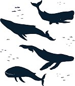 Marine mammals. Silhouette