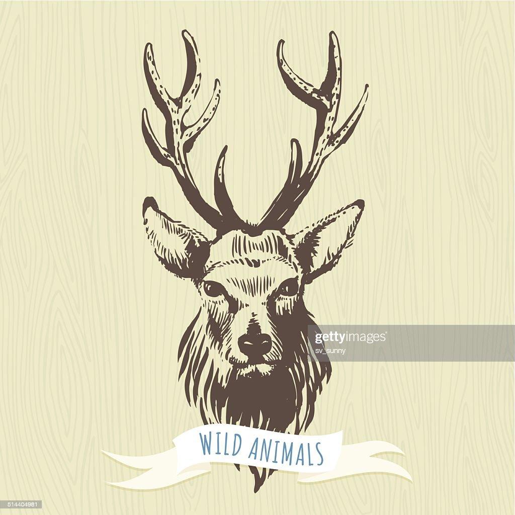 Marker hand-drawn forest animals: deer