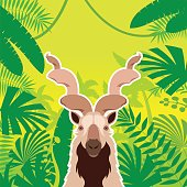 Markhor on the Jungle Background