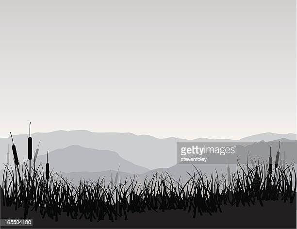 Marshland with Cattails