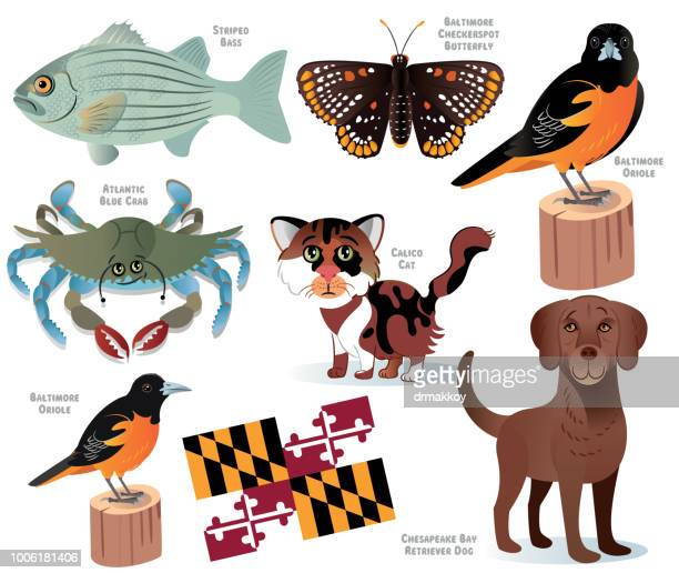illustrations, cliparts, dessins animés et icônes de animaux de l'état du maryland - chat humour