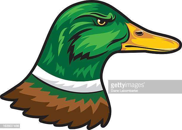 mascot style mallard duck - duck stock illustrations, clip art, cartoons, & icons