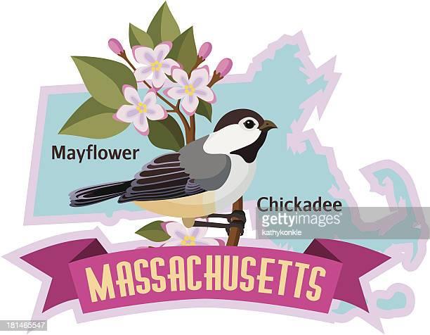 ilustrações, clipart, desenhos animados e ícones de chapim de pássaros do estado de massachusetts - pilritreiro