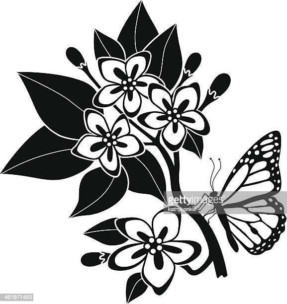 mayflowers and monarch butterfly - hawthorn,_victoria stock illustrations