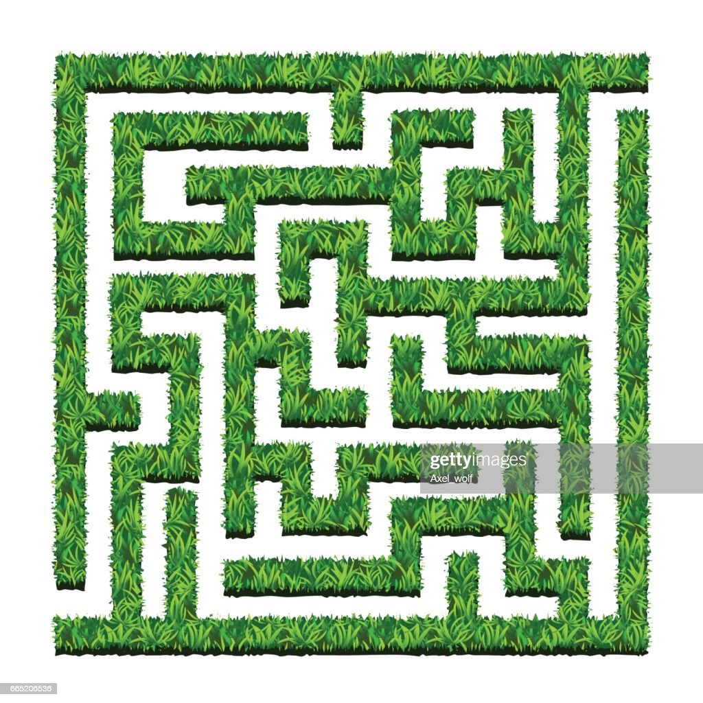 Maze of green bushes, labyrinth garden. Vector illustration. Isolated