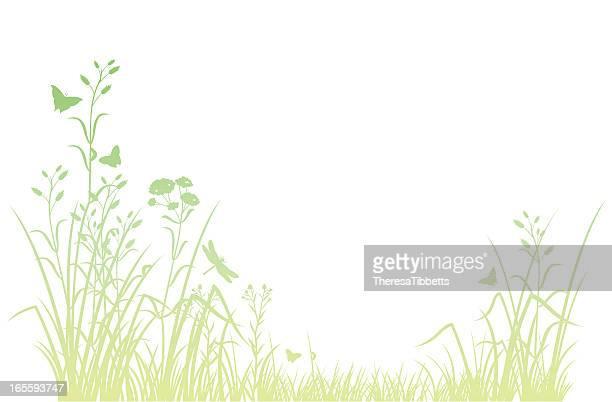 meadow - wildflower stock illustrations