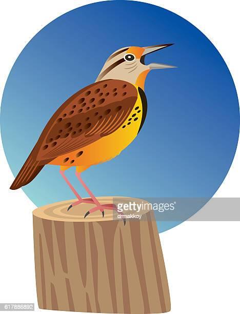 ilustrações de stock, clip art, desenhos animados e ícones de cotovia-dos-prados - canto de passarinho