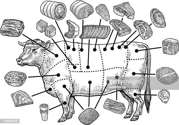 meat cuts - raw beef - meat stock illustrations
