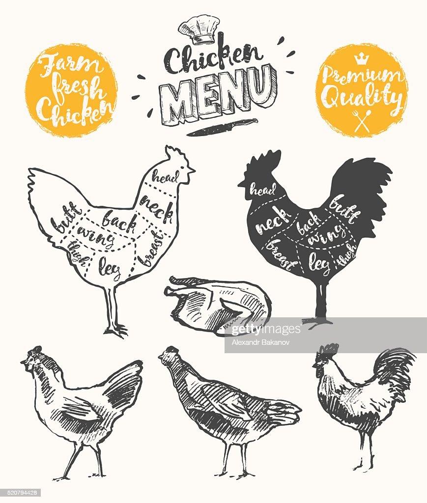 Meat menu scheme chicken cuts drawn vector