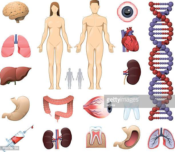 medical and anatomy icons - male likeness stock illustrations