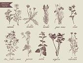 Medical herbs set. Hand drawn design.