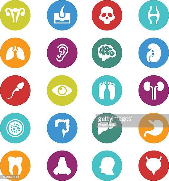 medical icon set - human digestive system stock illustrations, clip art, cartoons, & icons