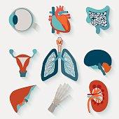 Medical icons of internal human organs