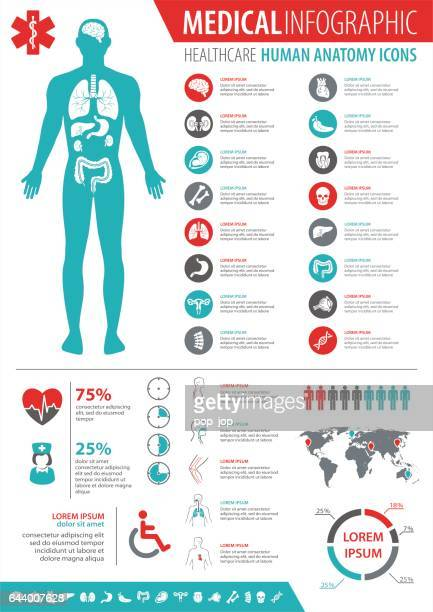 medical infographic - the human body stock illustrations