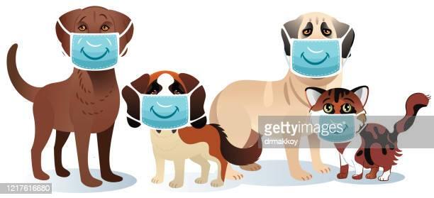 illustrations, cliparts, dessins animés et icônes de masque médical et animaux de compagnie - chat humour