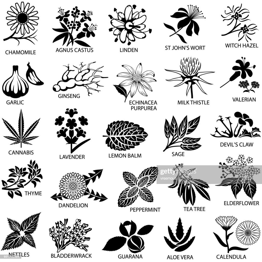 Medicinal Herbs Icons Set : stock illustration