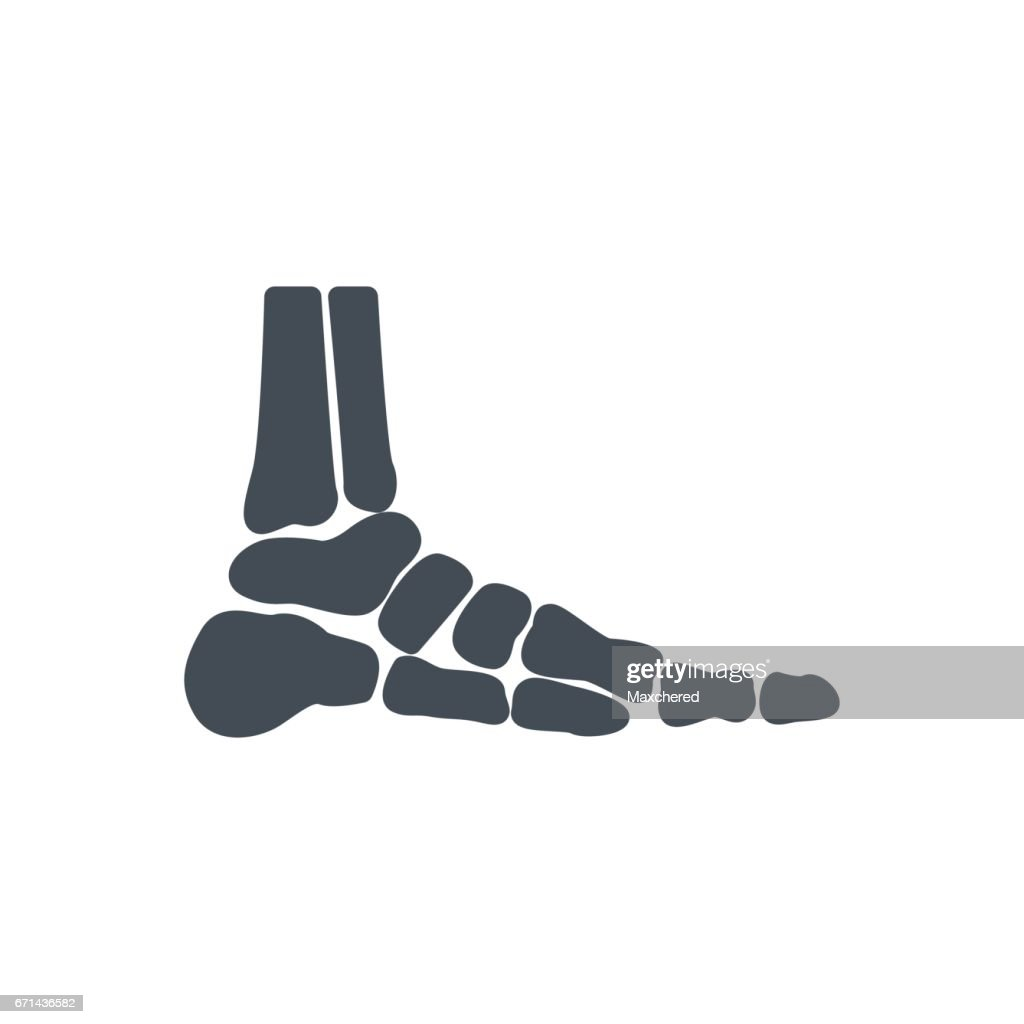 Medicine Bones Silhouette Icon Feet Vector Art | Getty Images