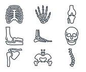 Medicine Line Icon Human Bones