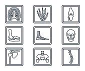 Medicine Line Icon X-ray Bones