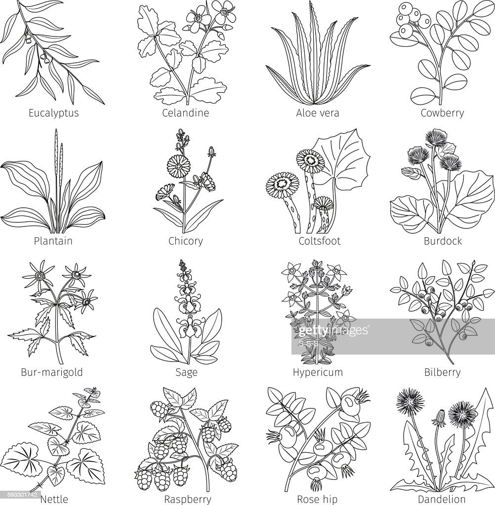 Medicine plants and herbs collection