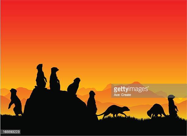illustrazioni stock, clip art, cartoni animati e icone di tendenza di suricati in linea - mangusta