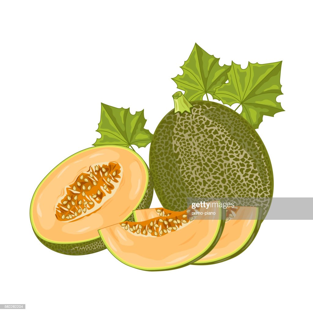 Melon fruit on white background.