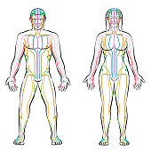 Meridian system - colored meridians of male and female body - alternative therapy tcm treatment infographic - isolated vector illustration on white background.