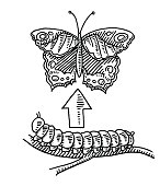 Metamorphosis Butterfly Caterpillar Drawing