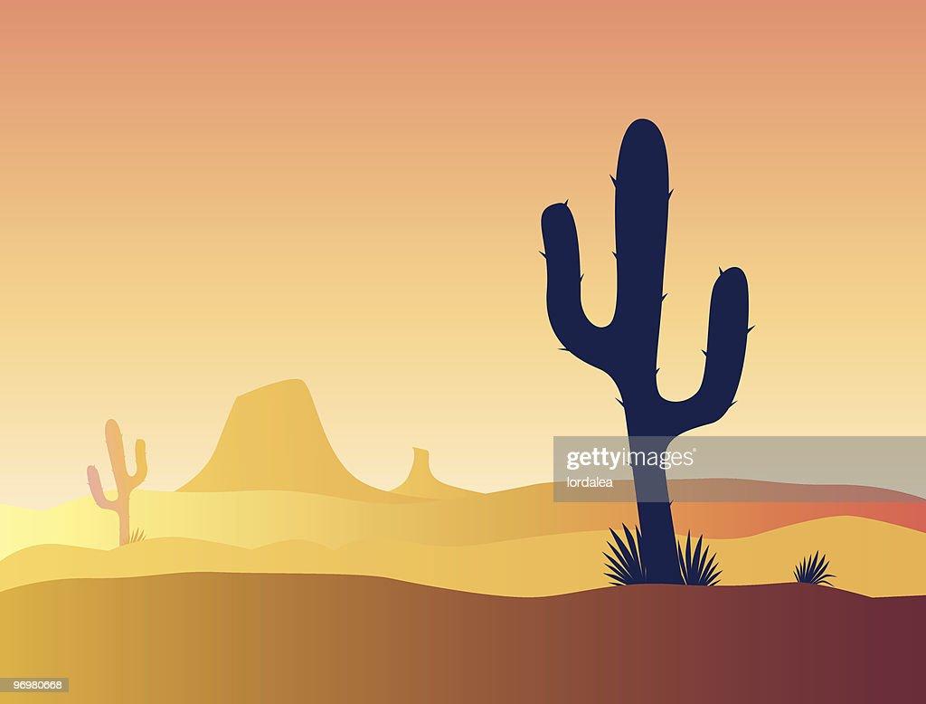 Mexico cactus desert sunset, vector illustration