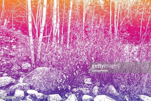 mezzotint illustration of a footpath in a minnesota state park - aspen tree stock illustrations, clip art, cartoons, & icons