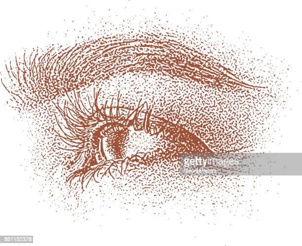 ilustrações, clipart, desenhos animados e ícones de ilustração de meia-tinta de um olho humano olhando para a frente - sobrancelha