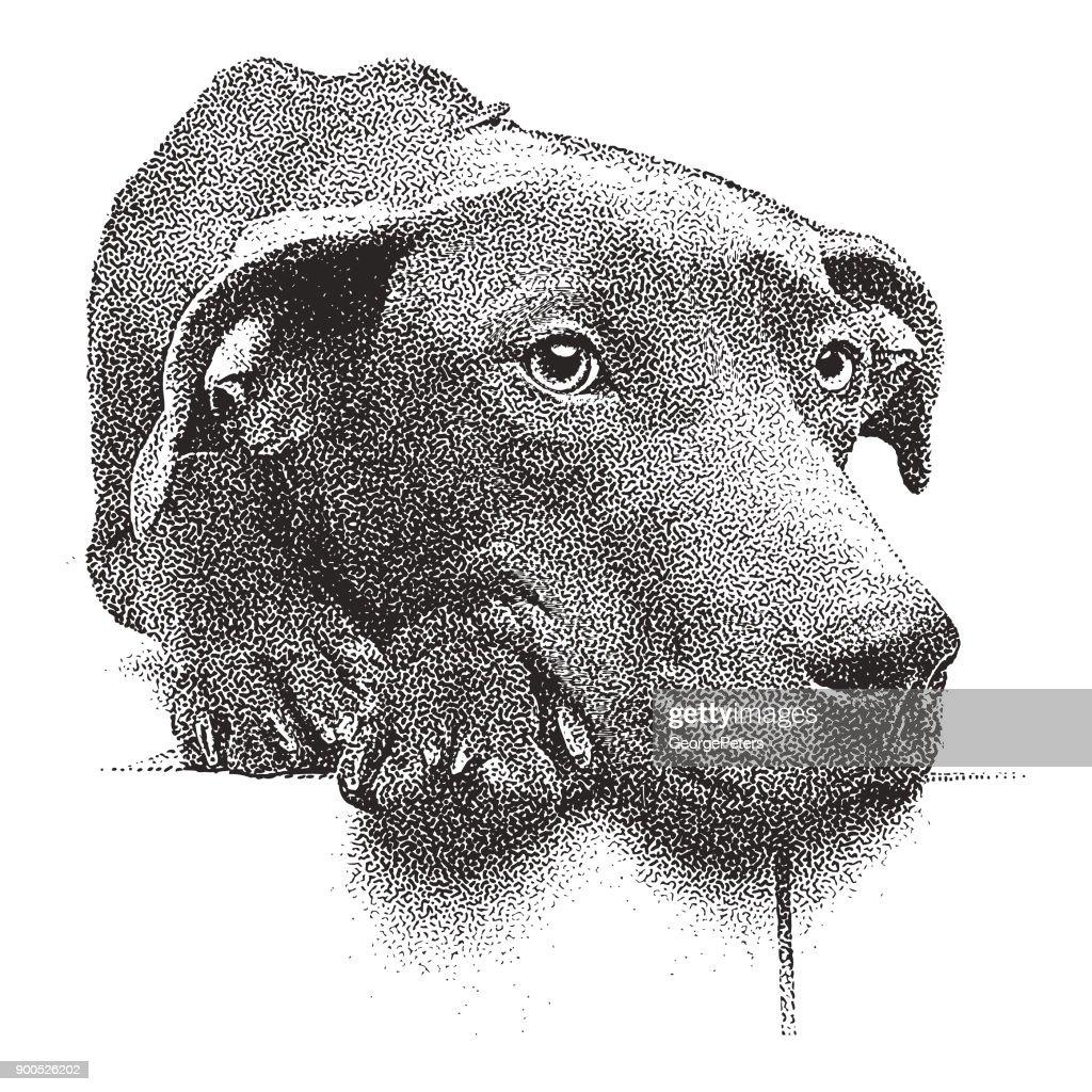 Mezzotint illustration of a sleepy Chocolate Labrador Retriever Pit Bull mixed breed dog.