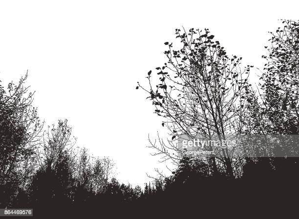 mezzotint silhouette of trees - pen and ink stock illustrations