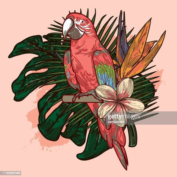 millennial pink and coral tropical plant and floral bouquet - millennial pink stock illustrations