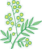 Mimosa branch. Isolated doodle and cartoon floral element. Vector illustration.