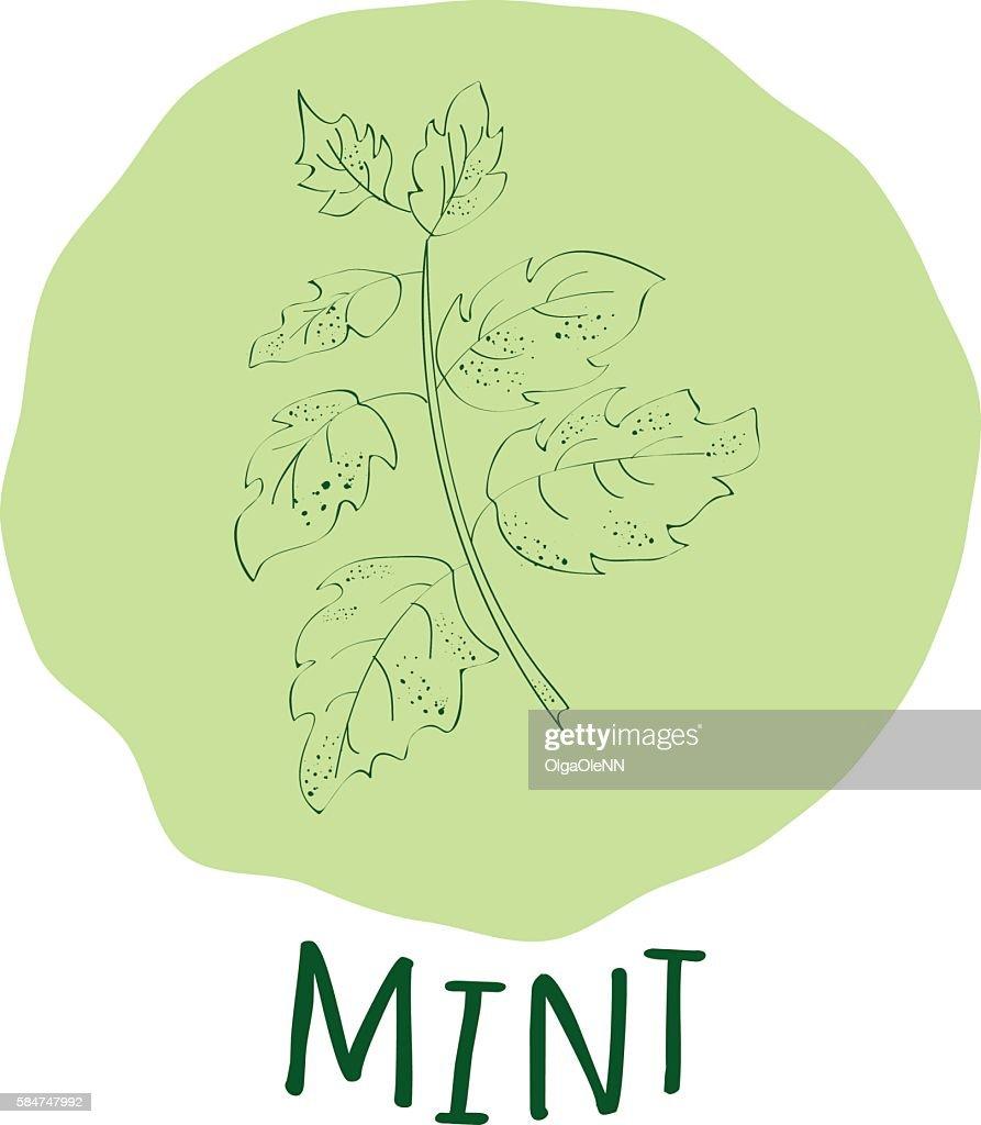 Mint branch vector illustrator